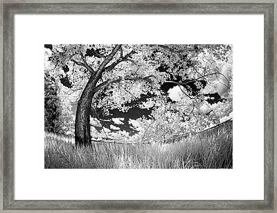 Framed Print featuring the photograph Poplar On The Edge Of A Field by Dan Jurak