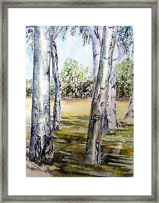 Poplar Tree   Framed Print by Paul Sandilands
