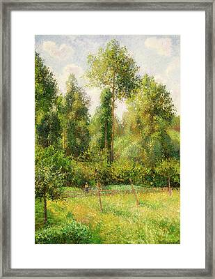 Framed Print featuring the painting Poplars - Eragny by Camille Pissaro