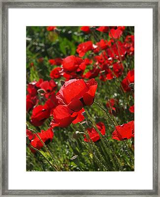 Poppies 03 Framed Print by Arik Baltinester