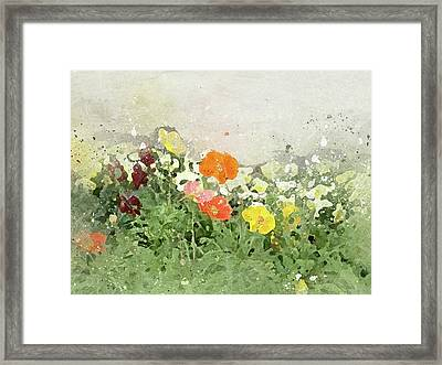 Poppies-2-c Framed Print