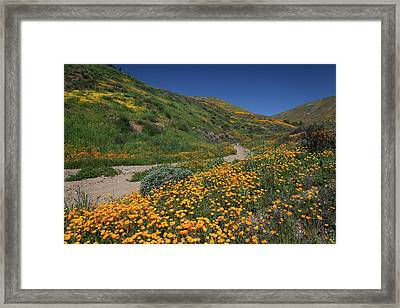 Framed Print featuring the photograph Poppies Along Riverbed by Cliff Wassmann