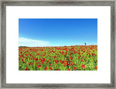 Poppies And A Photographer Framed Print by Terri Waters