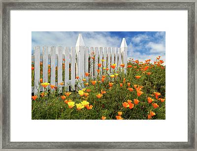 Framed Print featuring the photograph Poppies And A White Picket Fence by James Eddy