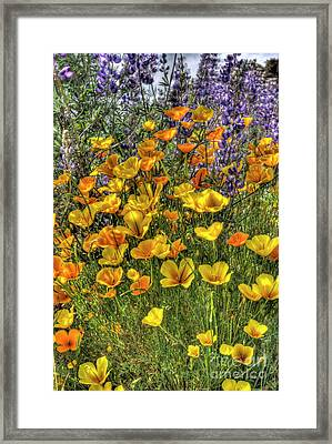 Framed Print featuring the photograph Poppies And Lupines by Jim and Emily Bush
