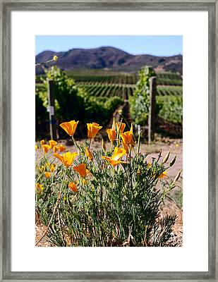 poppies and Vines Framed Print by Gary Brandes