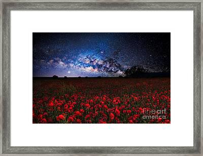 Poppies At Night Framed Print by Sebastien Coell
