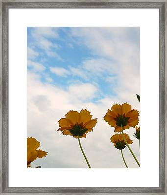 Poppies At Staats Lake Framed Print by Katherine Adams