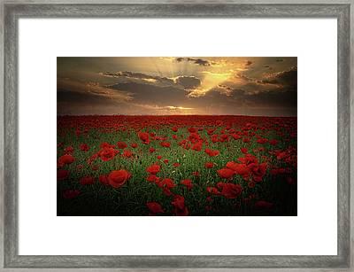 Poppies At Sunset Framed Print by Albena Markova