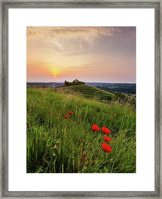 Framed Print featuring the photograph Poppies Burns by Davor Zerjav