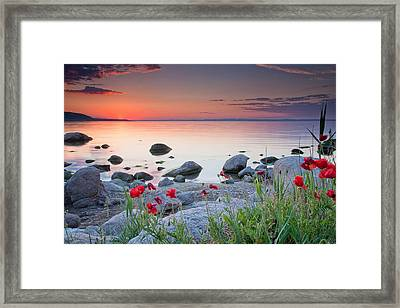 Poppies By The Sea Framed Print by Evgeni Dinev