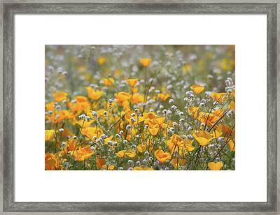 Framed Print featuring the photograph Poppies Fields Forever  by Saija Lehtonen