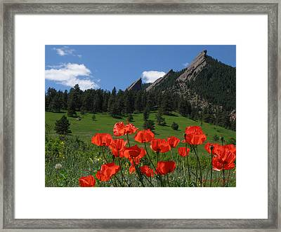 Poppies Flatirons Framed Print