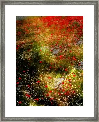 Poppies For Remembrance Framed Print