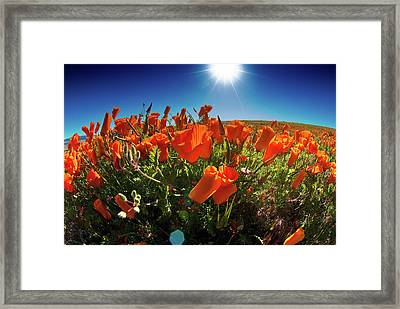 Framed Print featuring the photograph Poppies by Harry Spitz