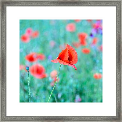 Framed Print featuring the photograph Poppies In A Field by Marion McCristall
