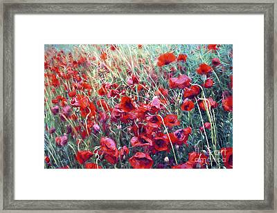 Poppies In Motion Framed Print by Jutta Maria Pusl