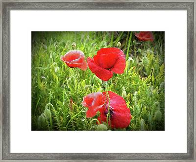 Poppies In Paris Framed Print by Louloua Asgaraly