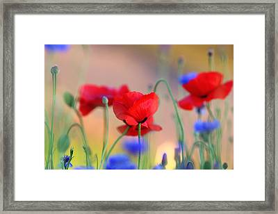 Poppies In Spring  Framed Print by Lynn Hopwood