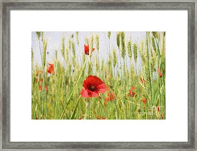Poppies In The Fields. Framed Print by ShabbyChic fine art Photography