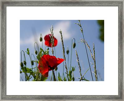 Poppies In The Skies Framed Print by Rainer Kersten