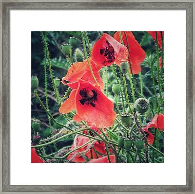 Framed Print featuring the photograph Poppies by Karen Stahlros