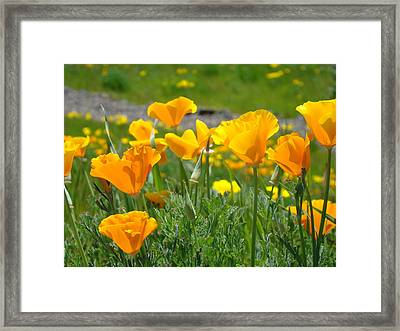 Poppies Meadow Summer Poppy Flowers 18 Wildflowers Poppies Baslee Troutman Framed Print by Baslee Troutman
