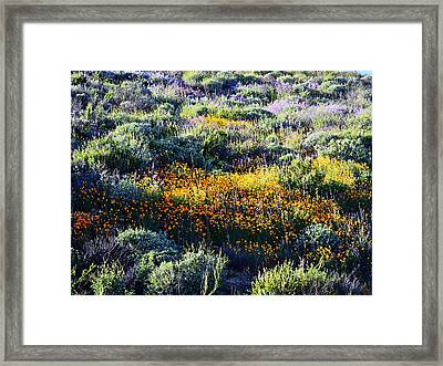 Framed Print featuring the photograph Poppies On A Hillside by Glenn McCarthy Art and Photography