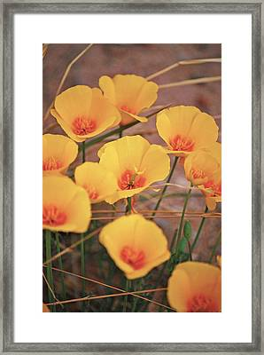 Poppies On Mount Lemmon Framed Print
