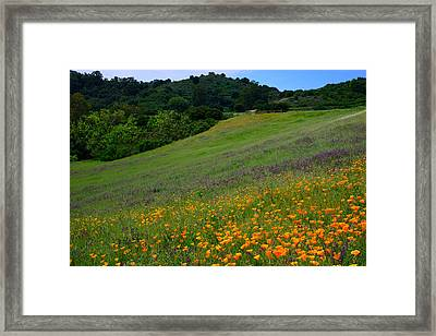 Poppies On The Hillside Framed Print by Kathy Yates