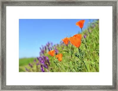 Poppies On The Ridge Framed Print by Kathy Yates