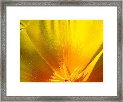 Poppies Orange Poppy Flower Close Up 2 Sunlit Poppy Baslee Troutman Framed Print by Baslee Troutman