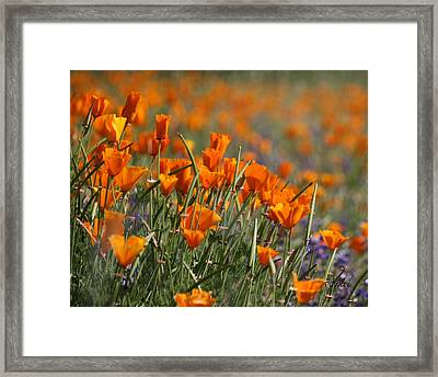 Framed Print featuring the photograph Poppies by Patrick Witz