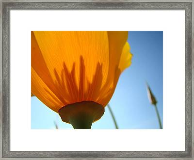 Poppies Sunlit Poppy Flower 1 Wildflower Art Prints Framed Print by Baslee Troutman