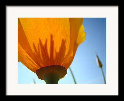 Flower Artwork Framed Prints