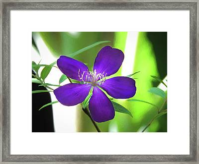 Poppin Purple Flower Framed Print by Penny Lisowski