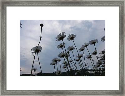 Poppin Framed Print