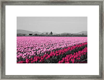 Poppin' The Pink Framed Print