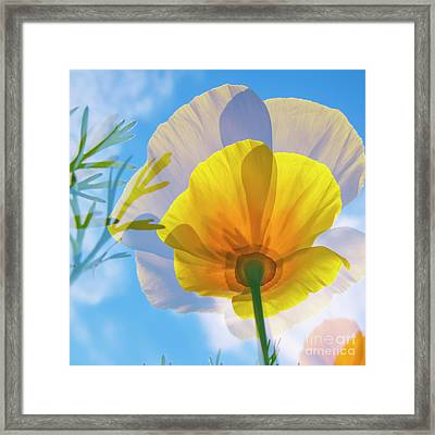 Poppy And Sun Framed Print by Veikko Suikkanen