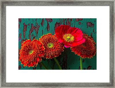 Poppy And Mums Framed Print by Garry Gay