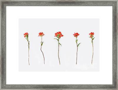 Poppy Blossoms Framed Print by Brittany Bevis
