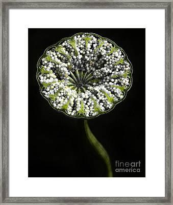 Poppy Capsule  Framed Print