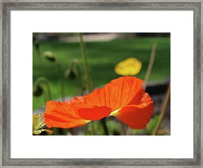 Poppy Cup Framed Print