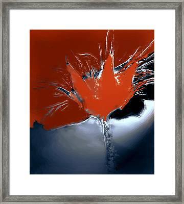 Poppy Explosion Framed Print by Irma BACKELANT GALLERIES