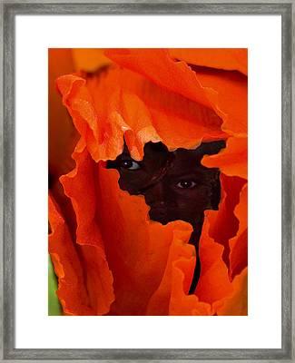 Poppy Faces By Jean Noren Framed Print by Jean Noren