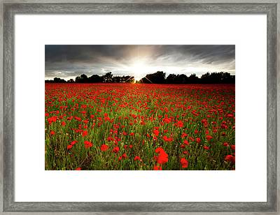 Poppy Field At Sunset Framed Print by Doug Chinnery