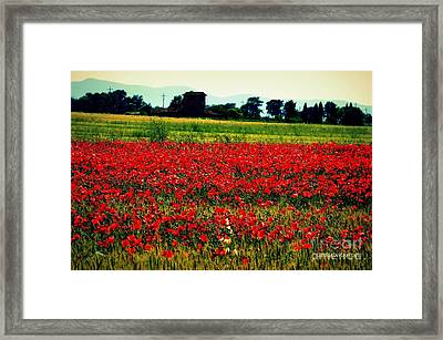 Poppy Field In Tuscany Framed Print