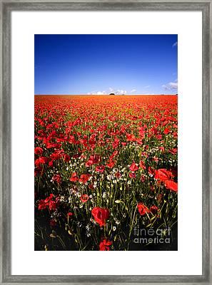 Poppy Field Framed Print by Meirion Matthias