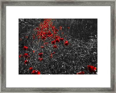 Poppy Field Framed Print by Svetlana Sewell