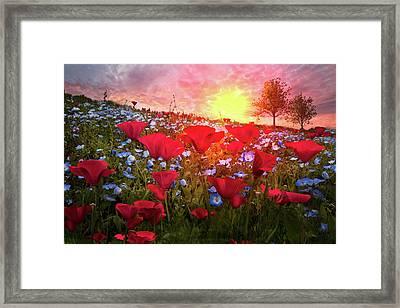 Poppy Fields At Dawn Framed Print by Debra and Dave Vanderlaan
